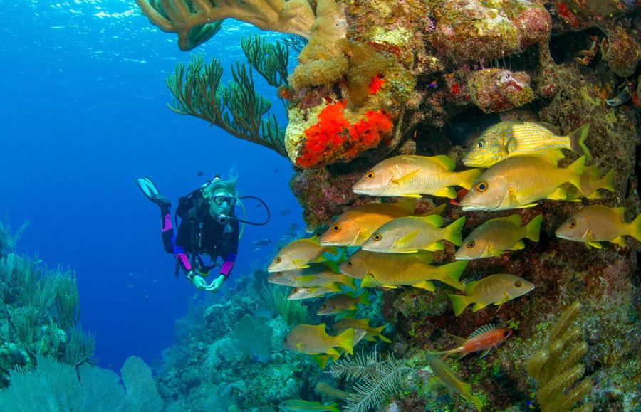 dalgıç ve balıklar